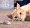 Rollerskating Madness Chihuahua - last post by PixelDust