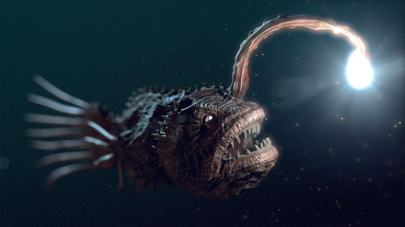 anglerfish and bioluminescent bacteria symbiotic relationship