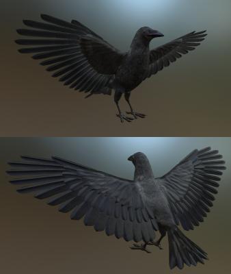 Craw / Raven