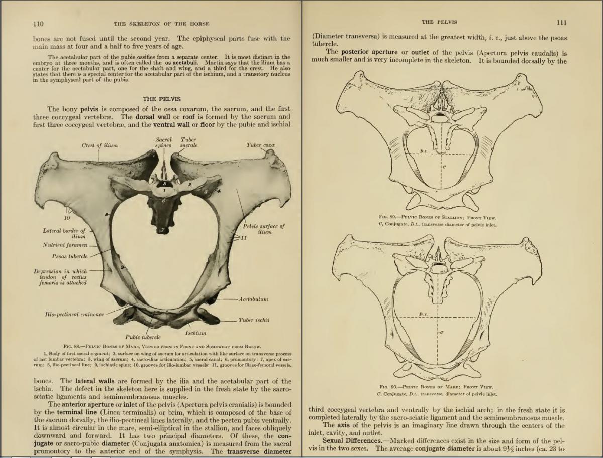 Berühmt Grundlagen Der Anatomie Und Physiologie 4. Auflage ...