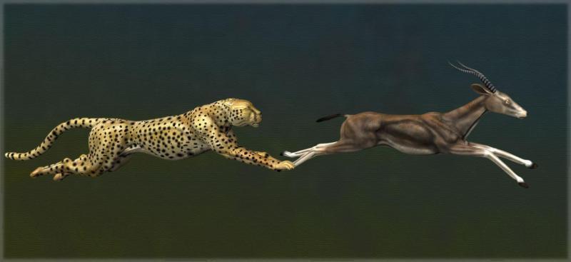 cheetah-gazlle2-copy.jpg