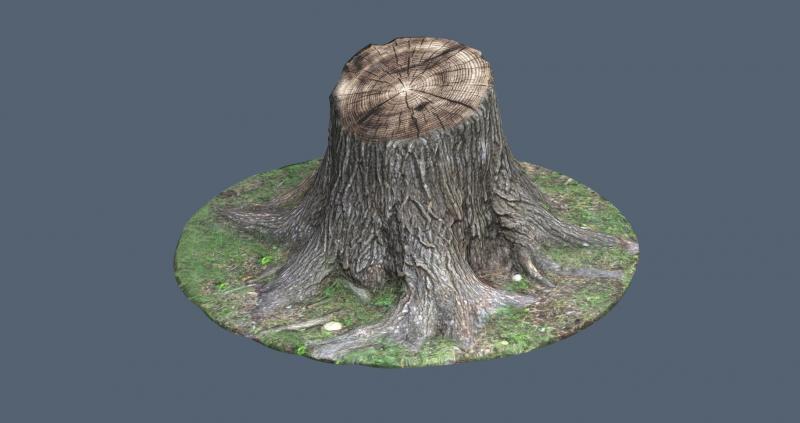 Tree_Trunk_2k.jpg