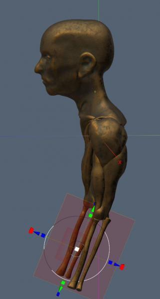 anatomy2.thumb.JPG.61be8f1665d03072cc4d988b2cdf44d9.JPG