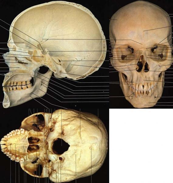 SkullProject02.thumb.jpg.d1c0b1bc45d9e6d7bebfb75186bf8fd0.jpg