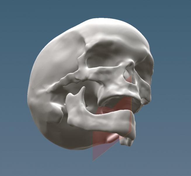 mandible.thumb.PNG.a38772b71a0fcfcf2656f93f059d5bb6.PNG