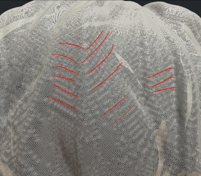 mesh_ridges.jpg